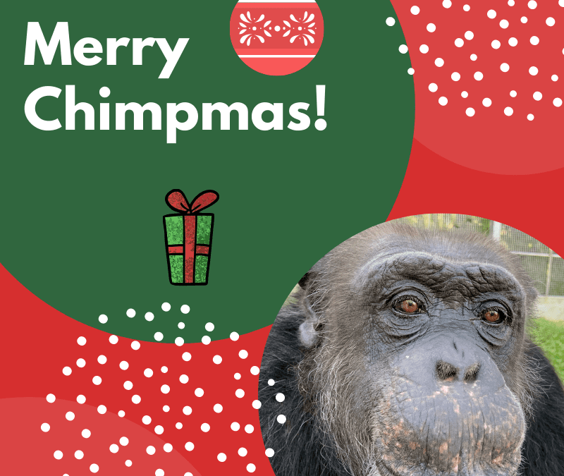 Merry Chimpmas