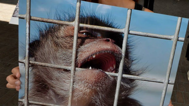It's time to retire primate experiments