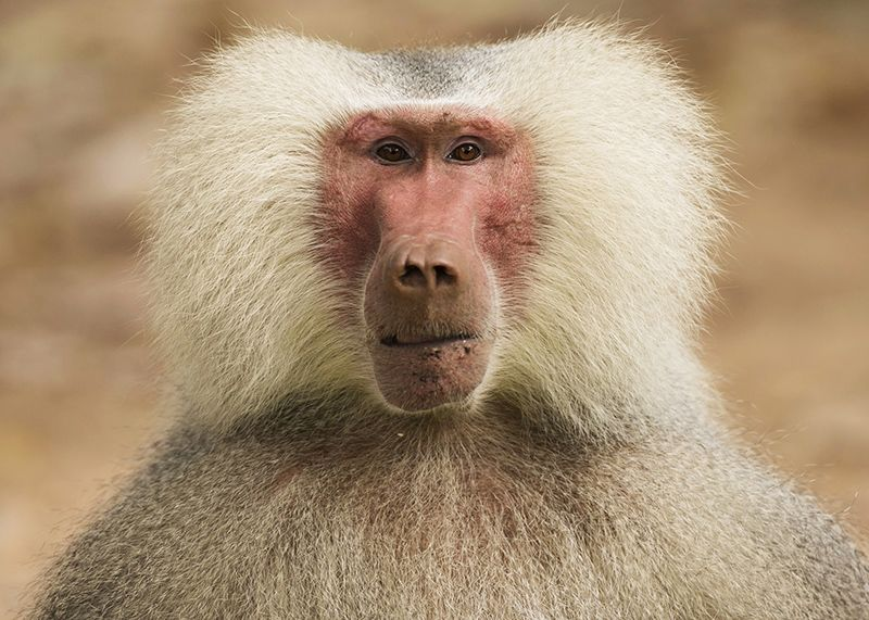 US lawmakers propose plan to reduce primate research at National Institutes of Health