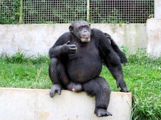 Political Primates