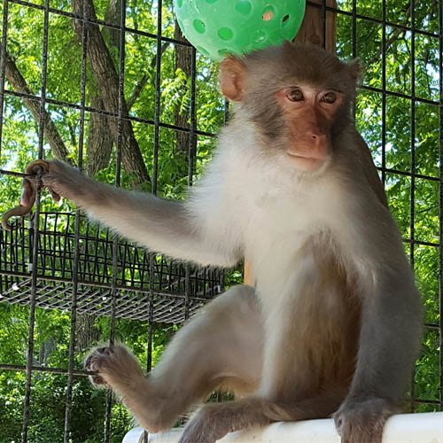 Monkeys | Primate Rescue Center