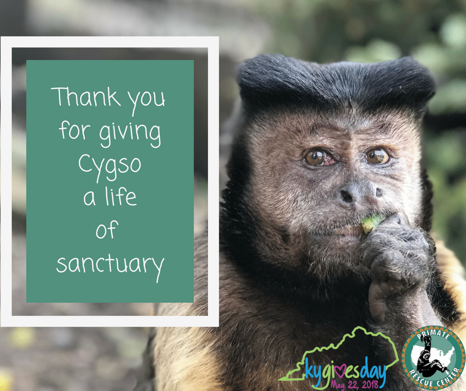 Give the Gift of Sanctuary on Kentucky Gives Day
