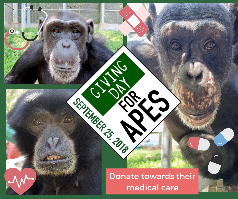 Give Big on Giving Day for Apes!