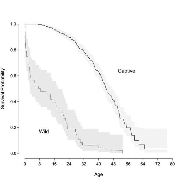 Personality links with lifespan in chimpanzees