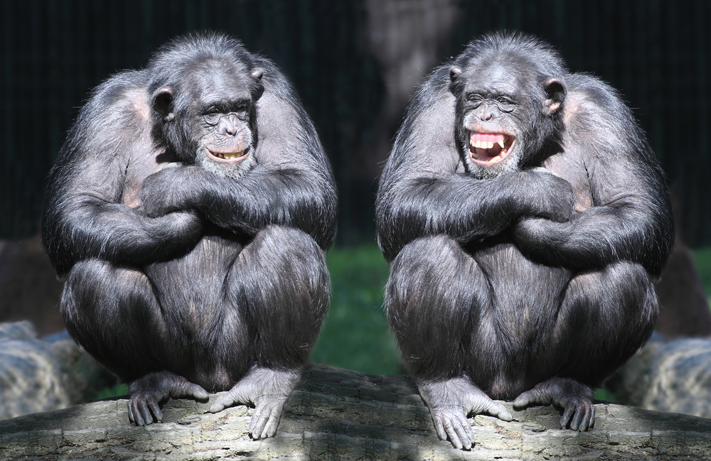 How Language Allows Scientists to Get Inside the Head of a Chimpanzee