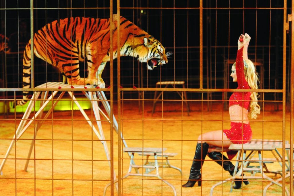 Breaking news: New Jersey becomes first state to adopt a sweeping ban on wild animals in circuses