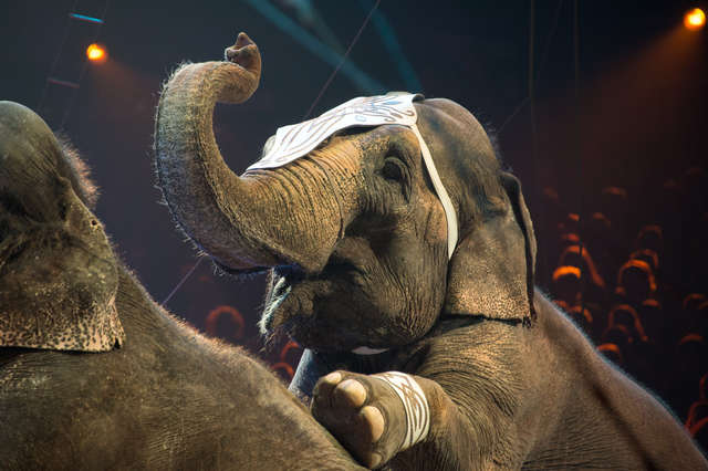 Second State Bans Wild Circus Animals – Hawaii