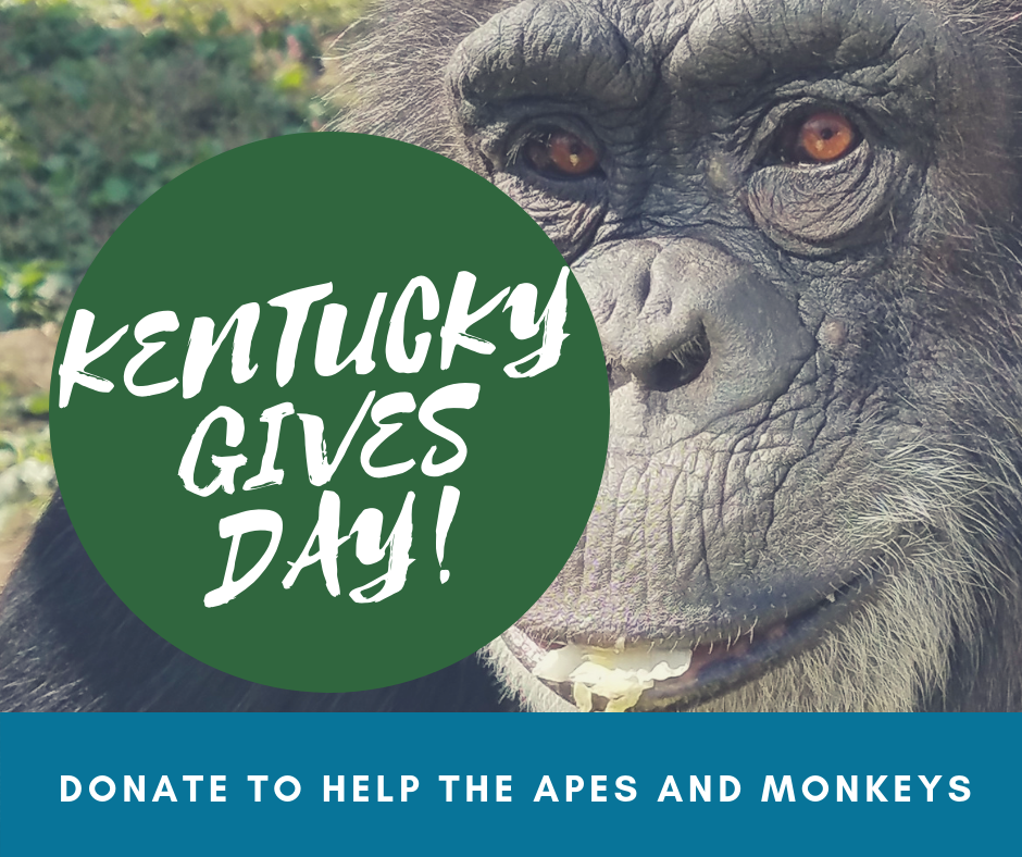 Give Big on Kentucky Gives Day!
