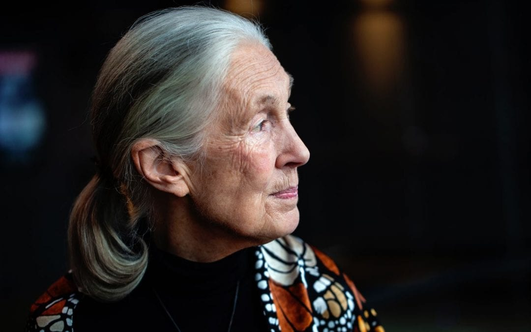 Jane Goodall on fighting climate change: 'The window of time is closing'