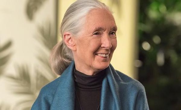 MasterClass – Dr. Jane Goodall Teaches Conservation