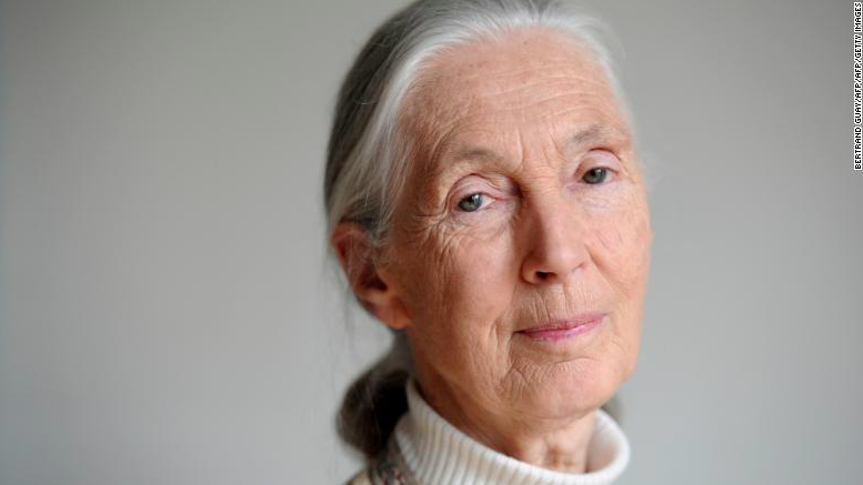 Dr. Jane Goodall's message of hope amid the coronavirus pandemic