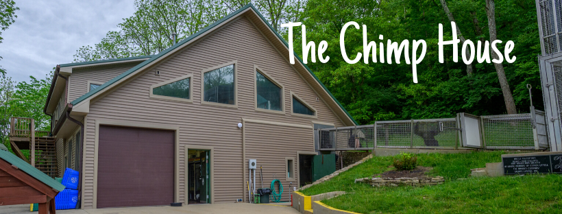 Chimp House
