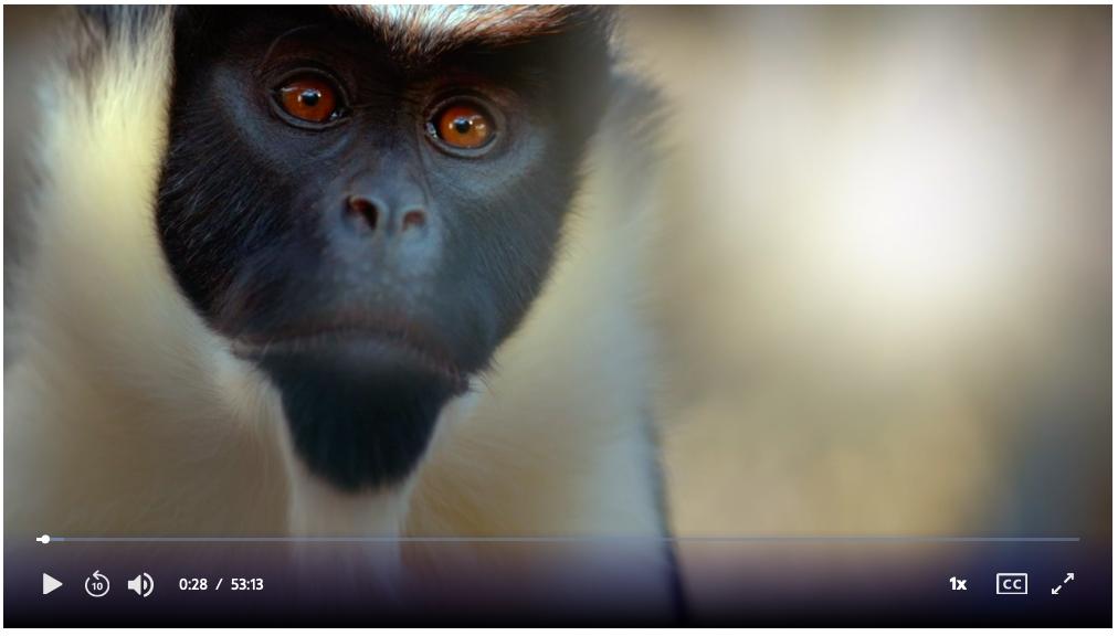 PBS Nature Episodes – Primates