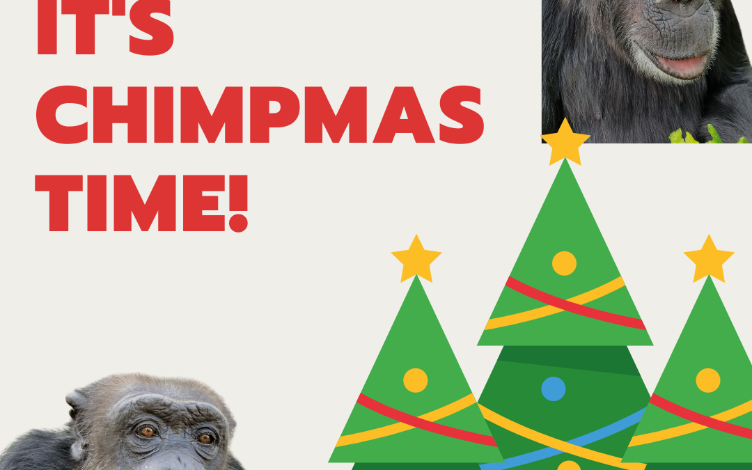 Have a Very Merry Chimpmas!