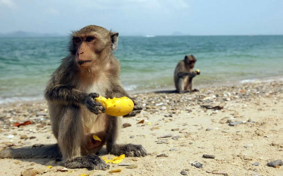 How rafts helped primates rule the world